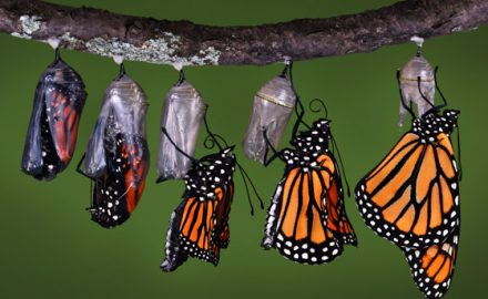 Data Transformation Butterfly Image